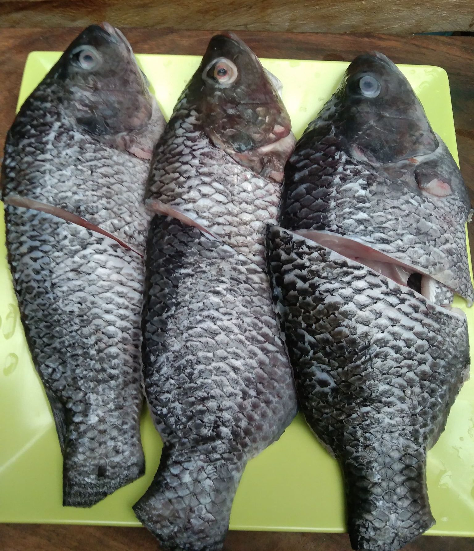 Three pieces of fresh tilapia on a plate.